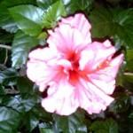 Reseñas primaverales de la blogosfera: Marzo 2009